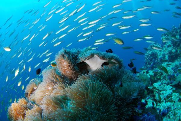 A víz alatt mindent kéknek látunk